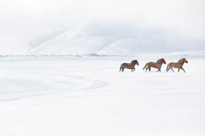 Необыкновенные фотографии стали возможны и благодаря сюрреалистическим снежным пейзажам Исландии.