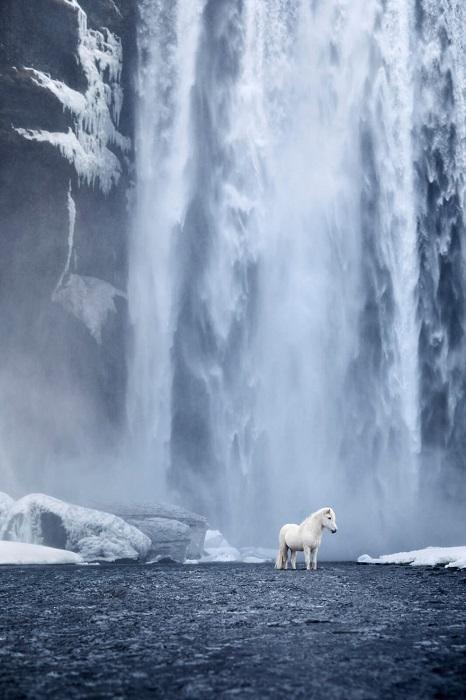 При создании серии «В царстве легенд» Дрю Доггет стремился подчеркнуть уникальную взаимосвязь между землей Исландии и ее лошадьми.