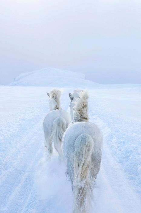 Свою экспедицию в снежные земли нью-йоркский фотограф планировал на протяжении нескольких месяцев.