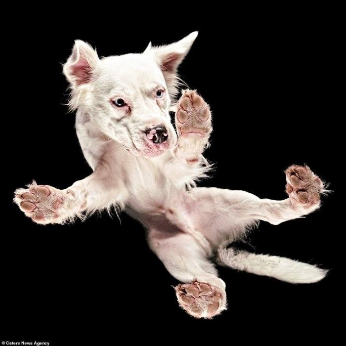 Пес с неиссякаемой энергией готов играться даже на стекле.