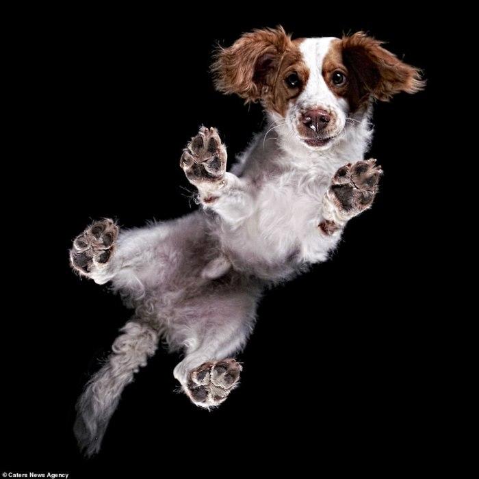 Добродушный пес с веселым нравом и блестящими глазами.