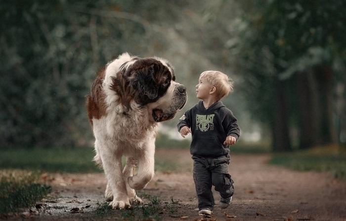 Собака бывает кусачей, только от жизни собачей.