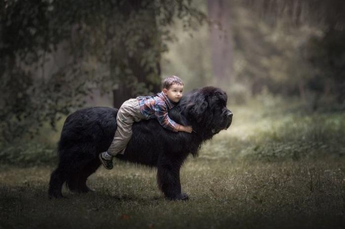Малыш решил прокатиться на огромном ньюфаундленде.