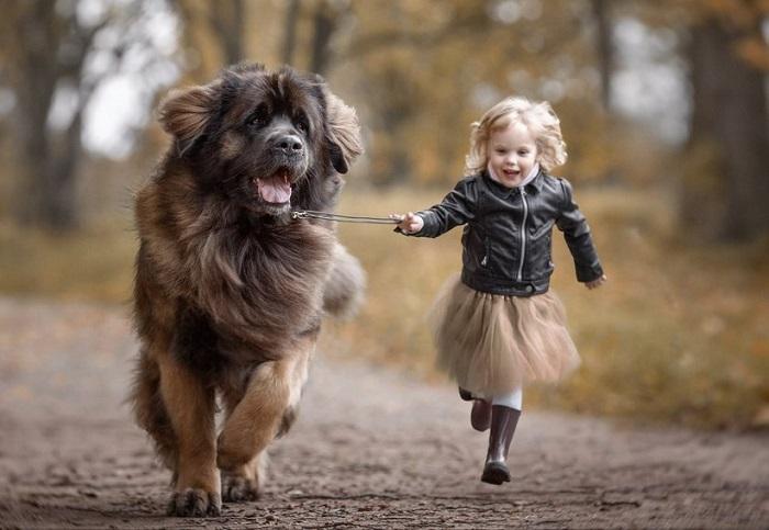 Дружелюбный и веселый пес со скоростью ветра мчится со своей хозяйкой.