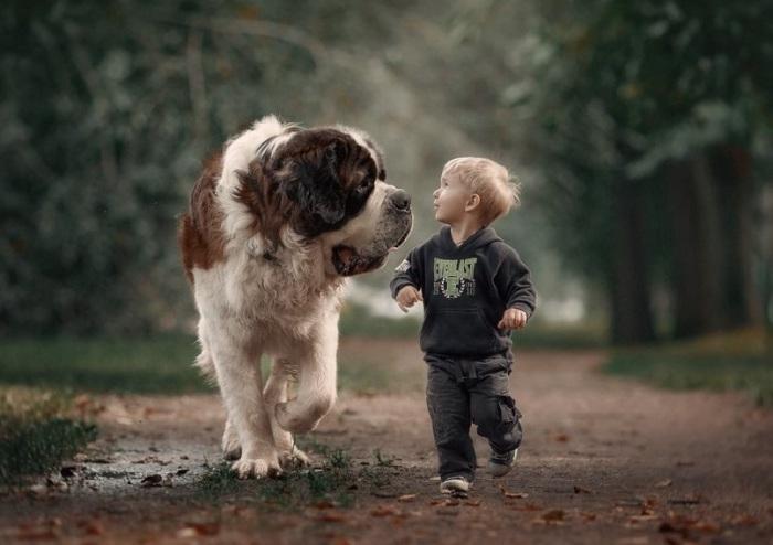 Сообразительный пес своим добрым и внимательным взглядом не оставит без внимания своего молодого хозяина.