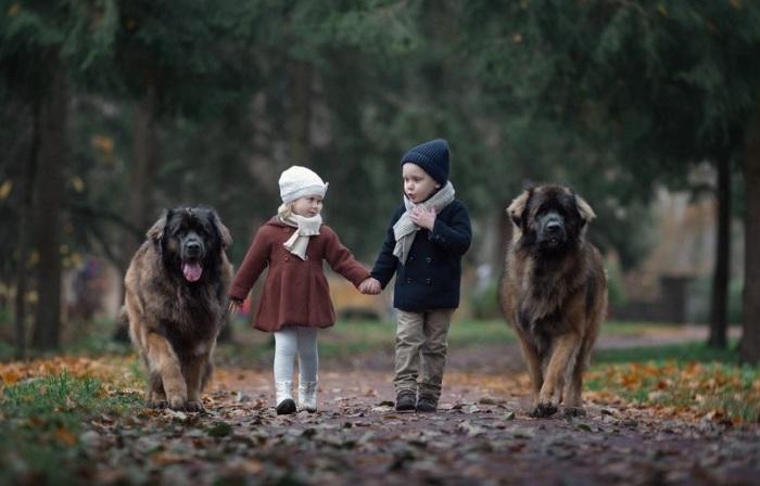 Сладкая парочка гуляет по парку в сопровождении четвероногих друзей.