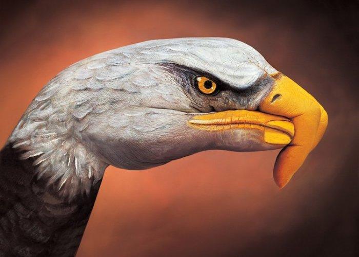 Художник Гвидо Даниэл (Guido Daniele) из Италии для своего творчества использует только руки моделей, создавая объемные изображения животных и птиц.