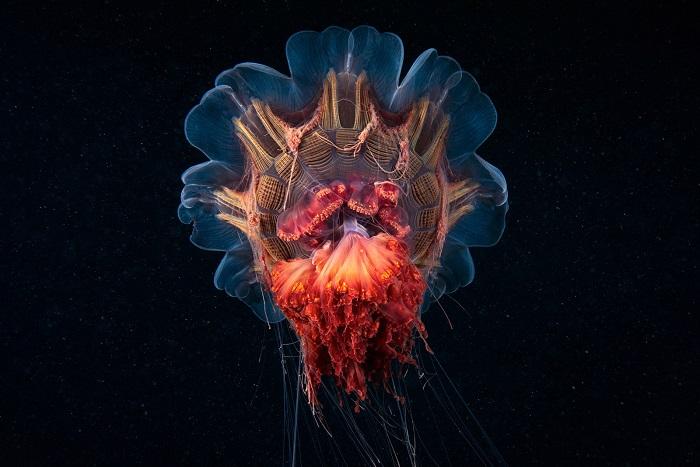 Фотография из серии снимков о фантастическом подводном мире северных морей. Фотограф: Александр Семёнов (Alexander Semenov), Россия.