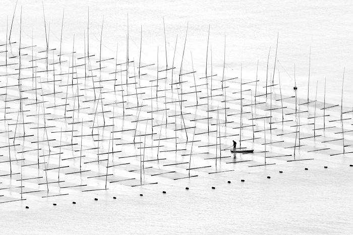 Рыбак, плавающий на лодке среди бамбуковых прутьев, установленных для аквакультуры у берегов южного Китая. Фотограф: Туго Чэн (Tugo Cheng), Китай.