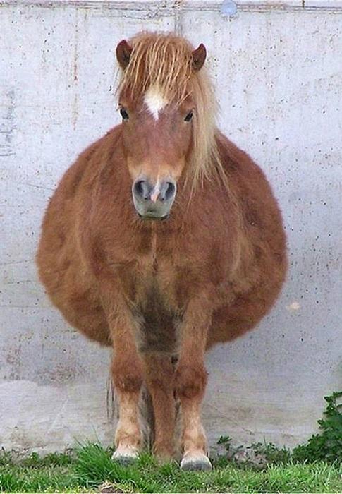 Беременная пони.