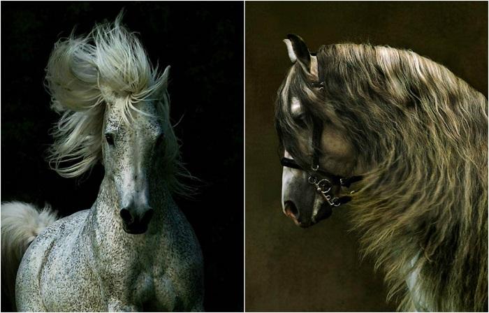 Сказочная красота породистых лошадей.