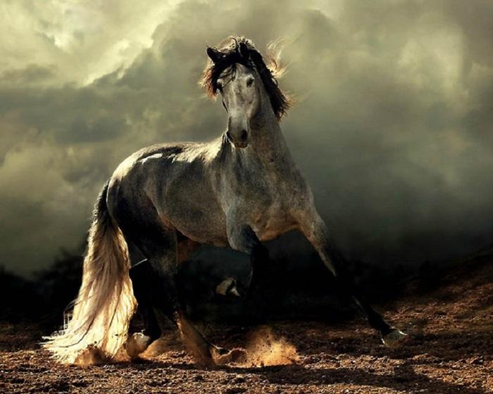 Андалузская порода лошадей - самая знаменитая в Испании.