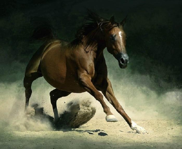 Среди остальных конных пород арабская выделяется блестящими интеллектуальными способностями.