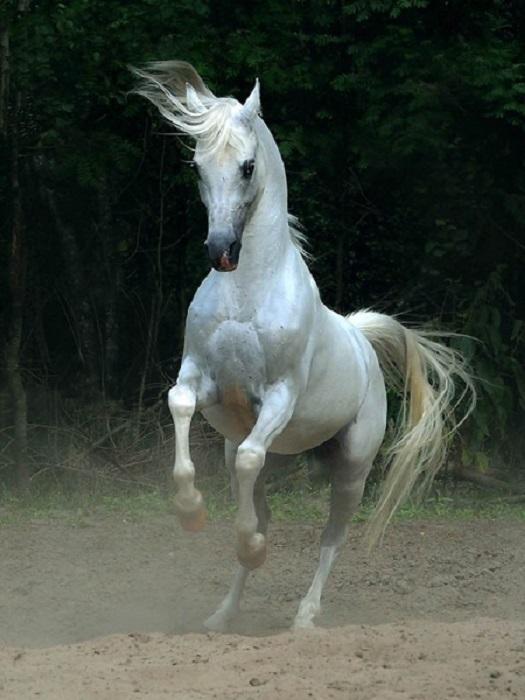 Лошади – прекрасные, величественные и грациозные создания.