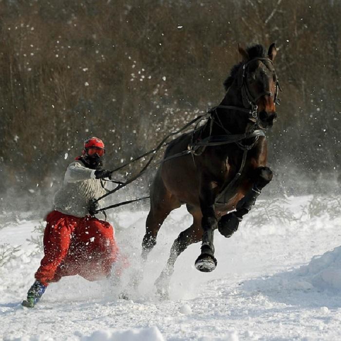 Самой редкой мастью у арабских лошадей считается вороная.