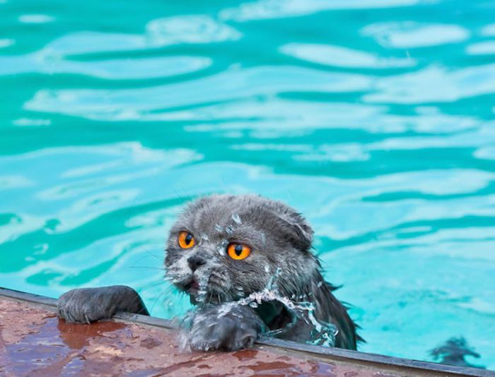 Почему Вы думаете, что кошки боятся воды?