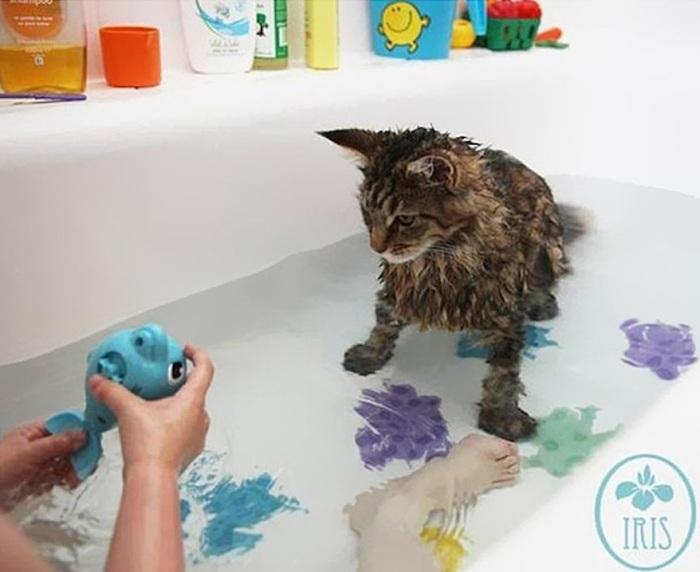 Мокрая кошка быстро замерзает и долго не может согреться, а инстинкт самосохранения подсказывает, что от воды следует держаться подальше, иначе можно замерзнуть.