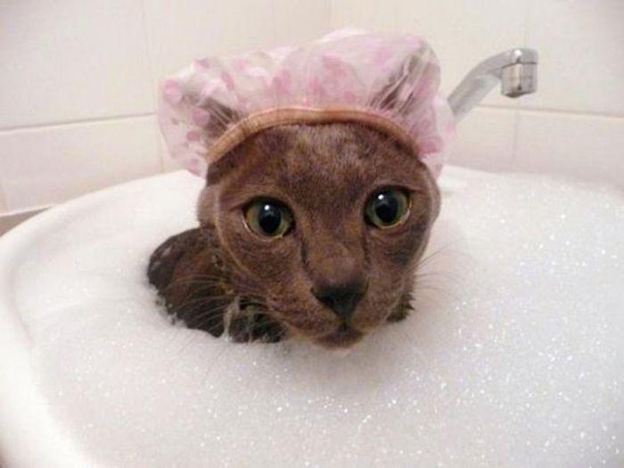 В глазах у этого кота немой вопрос: «За что?»