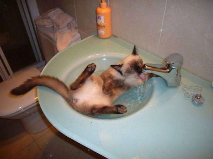 Очень люблю пить проточную воду.