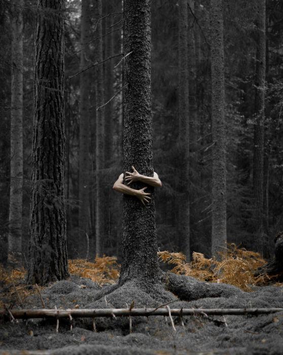 Человеческие руки обнимают ствол дерева, образуя с ним единое целое.