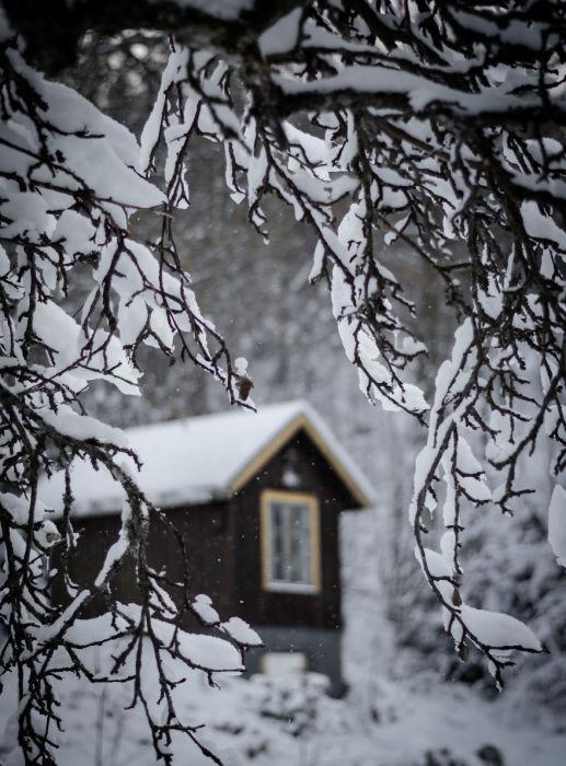 Хлопья мокрого снега прилепились на ветки деревьев, образуя фоторамку.