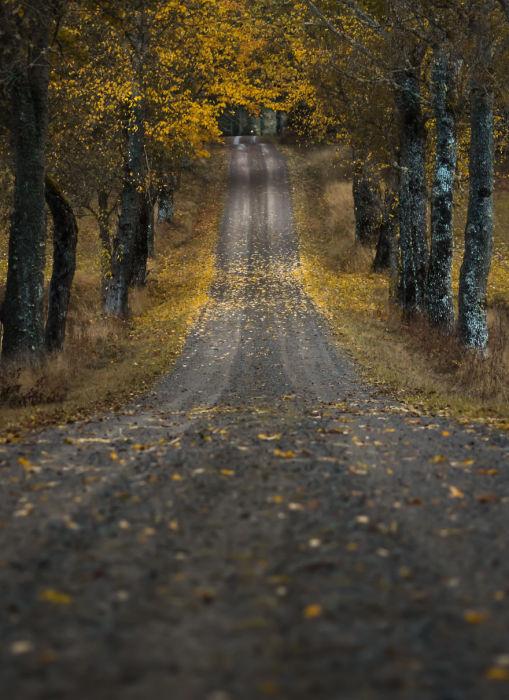Дорога, которая стремительно убегает вдаль.