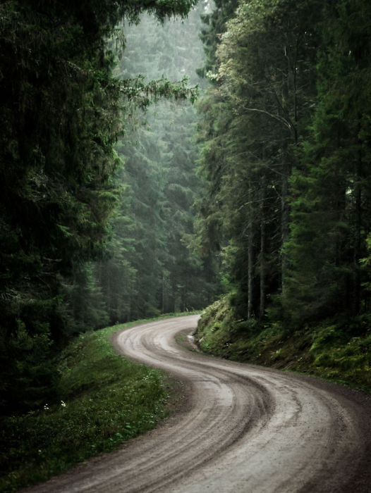 Извилистая дорога извивается вдоль лесной полосы.