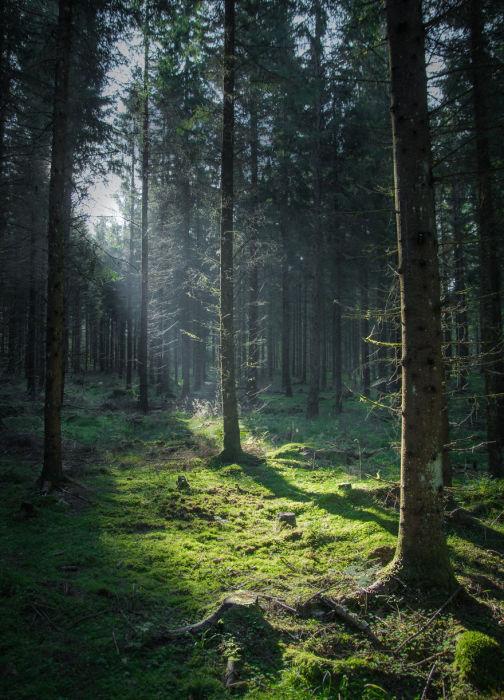 Солнечные лучи пробились сквозь верхушки деревьев и освещают теплом лесную поляну.