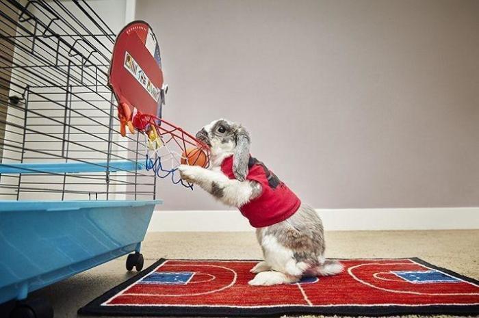 Кролик Бини из Израиля попал в Книгу рекордов Гиннеса забросив мяч в баскетбольную корзину семь раз за одну минуту.