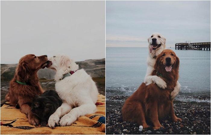 Трогательные  фотографии неразлучной троицы четвероногих друзей.