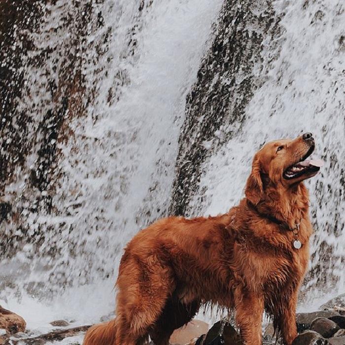 Жизнерадостная Кико позирует на фоне бушующего водопада.
