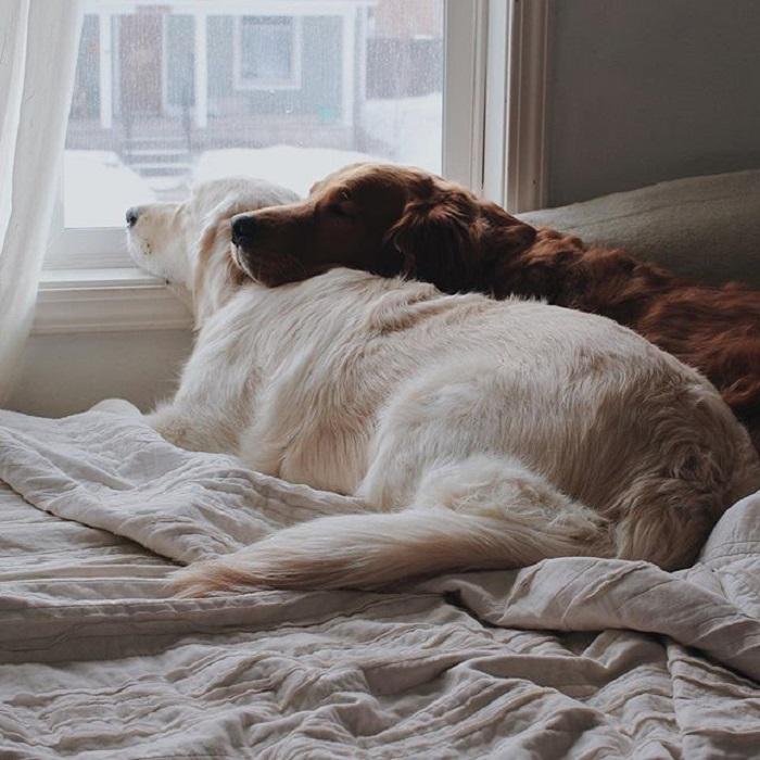 Дневной отдых в теплом и уютном доме.