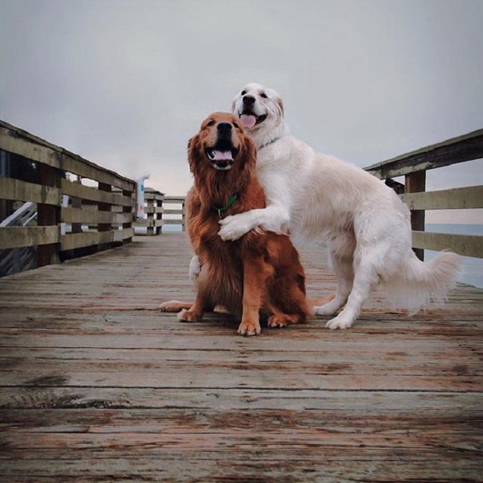 Кико и Уотсон всегда любят быть в центре внимания.