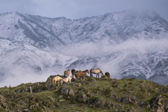 Пастбища, которые в различных горных районах имеют свои особенности. Автор фотографии: Старостенков Дмитрий Михайлович.