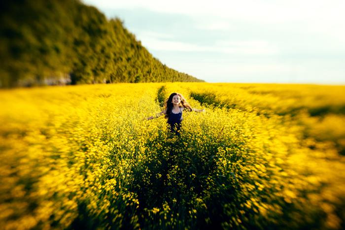 Особенная красота желтых полевых цветов. Автор фотографии: Алёна Теплова.