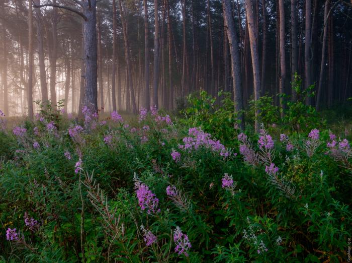 Утреннее блаженство в лесу. Автор фотографии: Игорь Горшков.