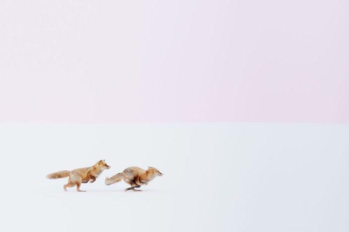 Автор фотографии: Хироки Иноуэ (Hiroki Inoue).