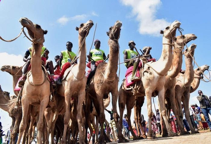 Профессиональные наездники в ожидании старта 21-километровой гонки верблюдов «Maralal International Camel Derby».