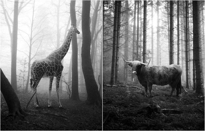 Животные, «освобожденные» с помощью Photoshoр.