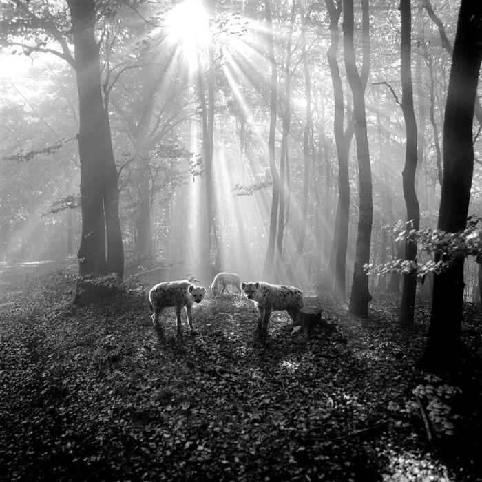 Немецкий фотограф Фрэнк Махаловски (Frank Machalowski) не жалует зоопарки.