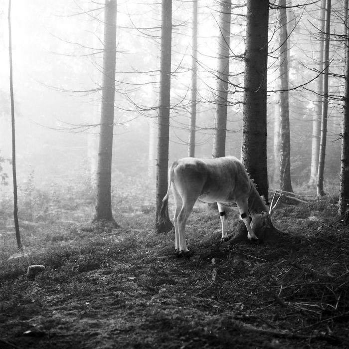 На снимках немецкого фотографа царит атмосфера спокойствия и умиротворения.