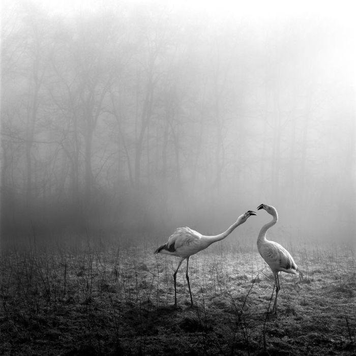 Нам остается лишь любоваться необычными работами немецкого фотографа.