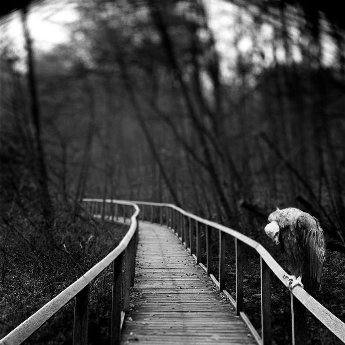 Фотограф очень сопереживает животным, которые вынуждены проводить много лет в неволе.