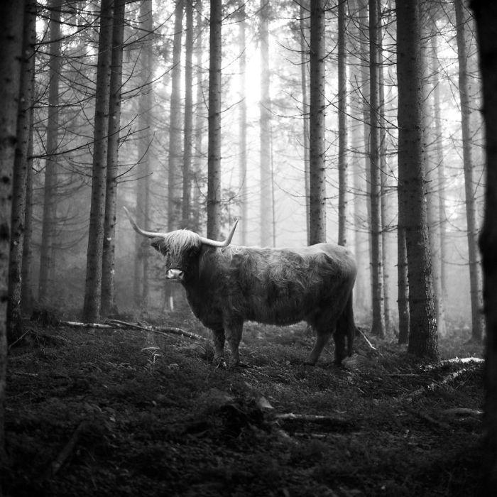 Серию «Животные в лесу» немецкий фотограф посвятил всем тем, кто томится в зоопарках.
