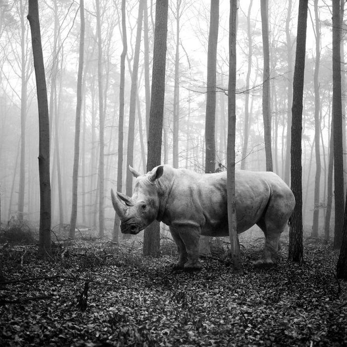 С помощью графического редактора Фрэнк Махаловски совместил лесные пейзажи и животных из зоопарка.