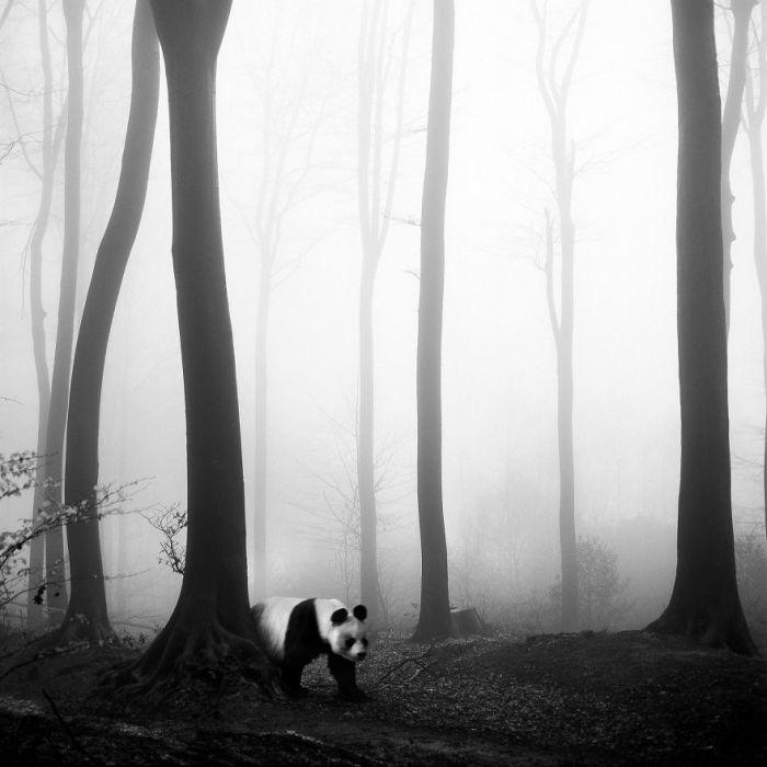 Среди туманных пейзажей Тевтобургского леса можно увидеть самых разнообразных экзотических животных.