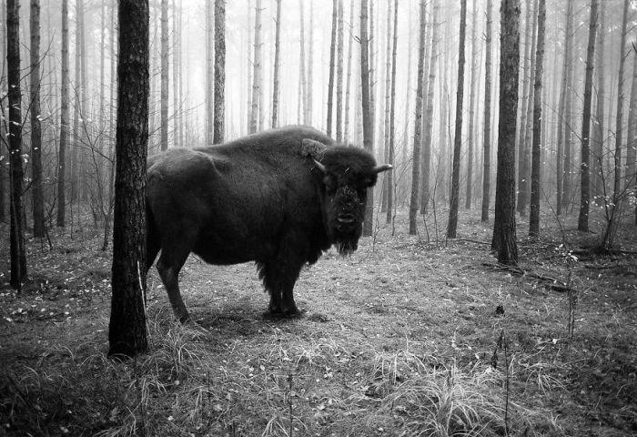 Глядя на эти фотографии, кажется, что животные отвоевали у человека свои места обитания.