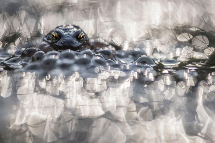 Высокой оценки заслужил снимок фотографа Роба Бланкена (Rob Blanken), сделанный в Венвудене (Нидерланды).