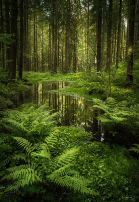 Зеркало леса. Ленинградская область.