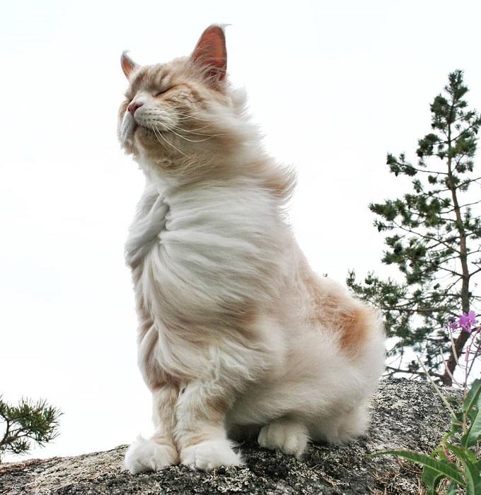Кот Лотос обожает прогулки на свежем воздухе и даже суровая швейцарская зима ему не помеха.